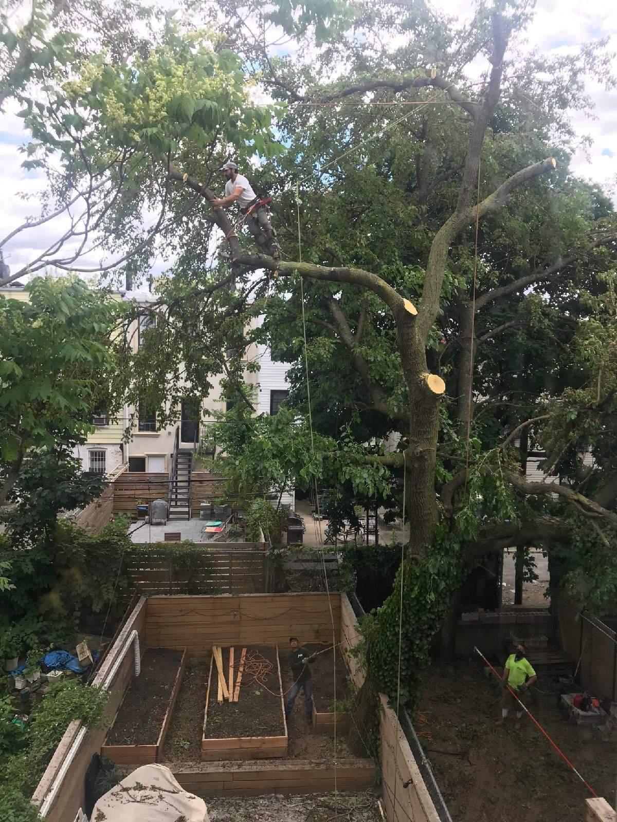 Call Tarzan Tree Removal in Brooklyn NY