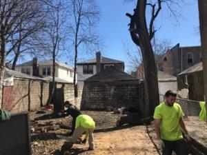 Top Brooklyn Tree Removal