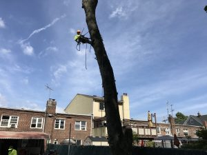 Tarzan Tree Removal Emergency Tree Removal