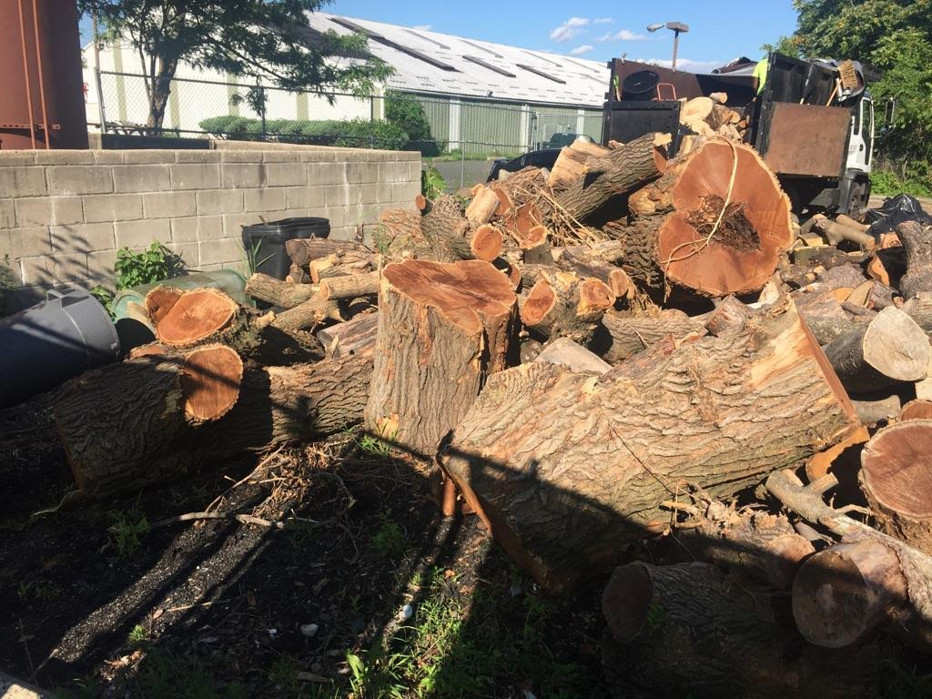 brooklyn firewood for sale free delivery - Tree Stumps For Sale