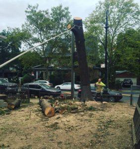 Tarzan Tree Removal