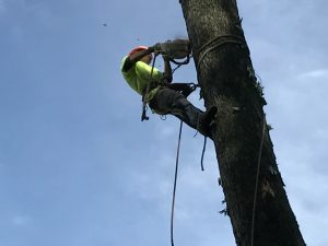 Call us for all Greenpoint Tree Services!