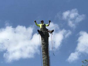 Call  Tarzan Tree Removal Service