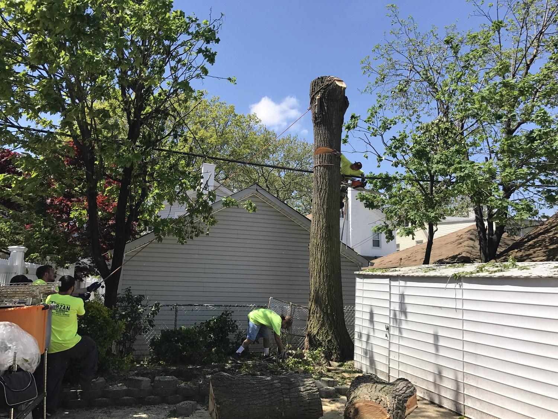 Brooklyn Tree Service