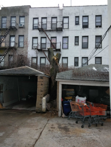 Tarzan Tree Removal Service
