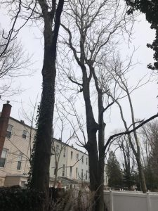 Call for all Bed-Stuy Tree Service Questions