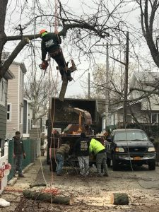 Tree Cutting Service in Brooklyn