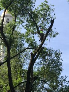 Ask About Our Summer Tree Services