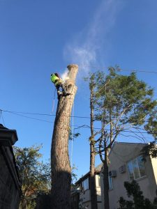 Tarzan Tree Removal Brooklyn NY