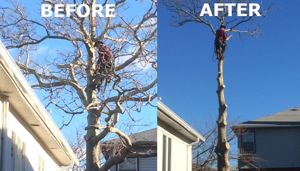 Best Tree Cutting Service