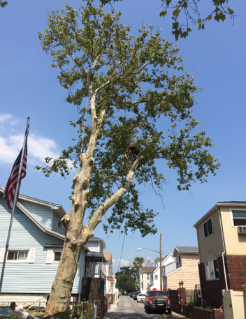 Brooklyn Tree Service Experts
