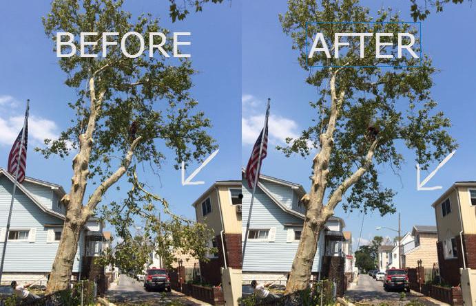#1 Tree Cutting Service