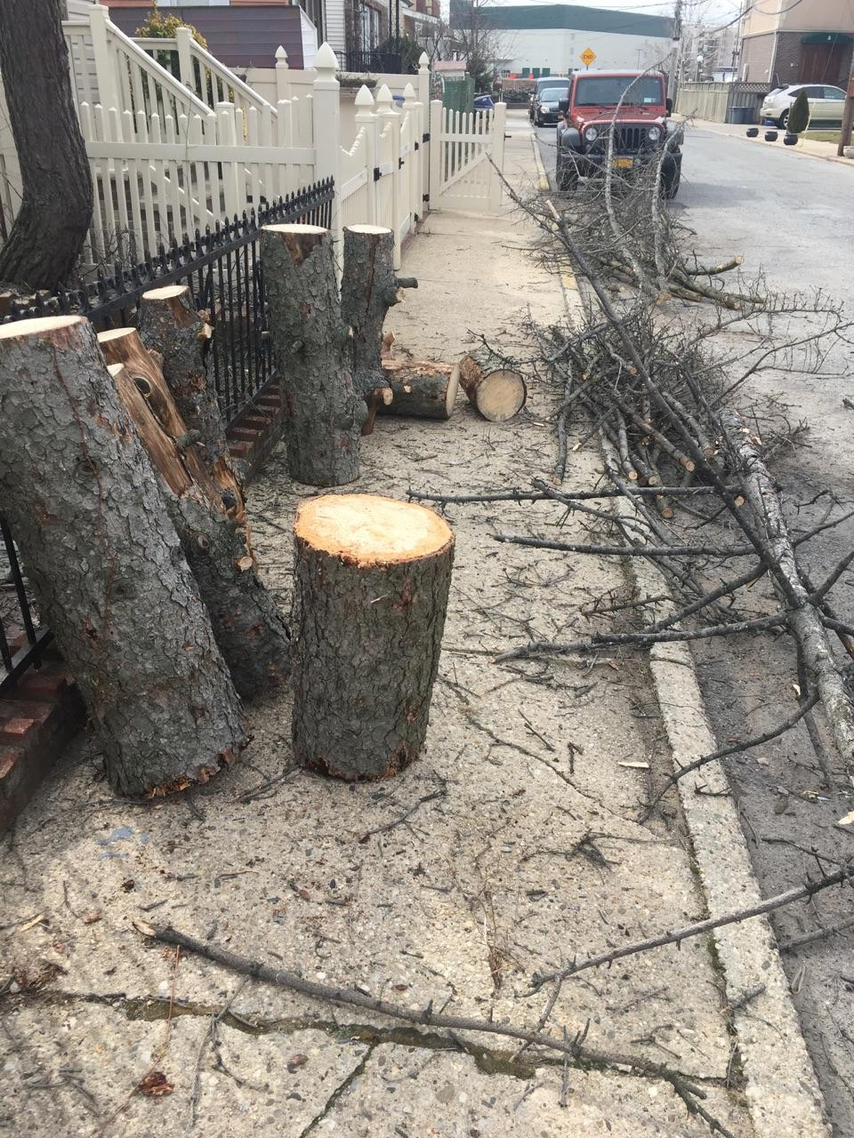 Tree Removal & Tree Trimming Service