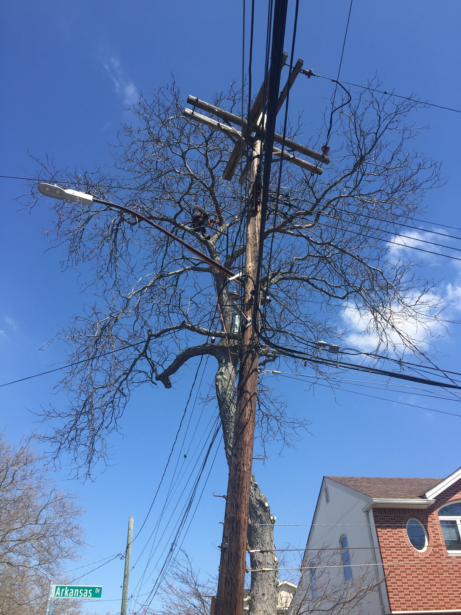 Power Lines Tree Removal Service
