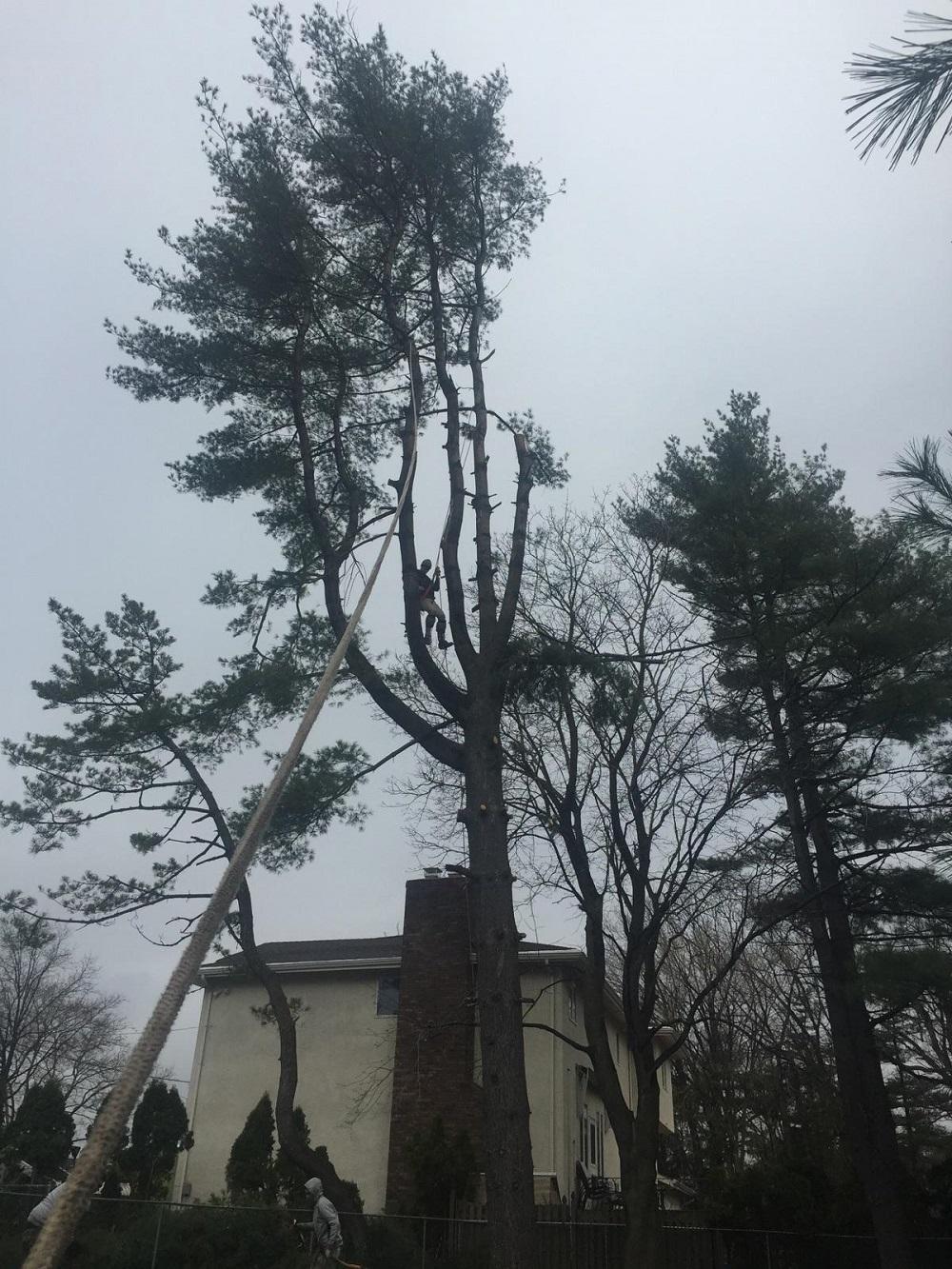 Bad weather tree remova