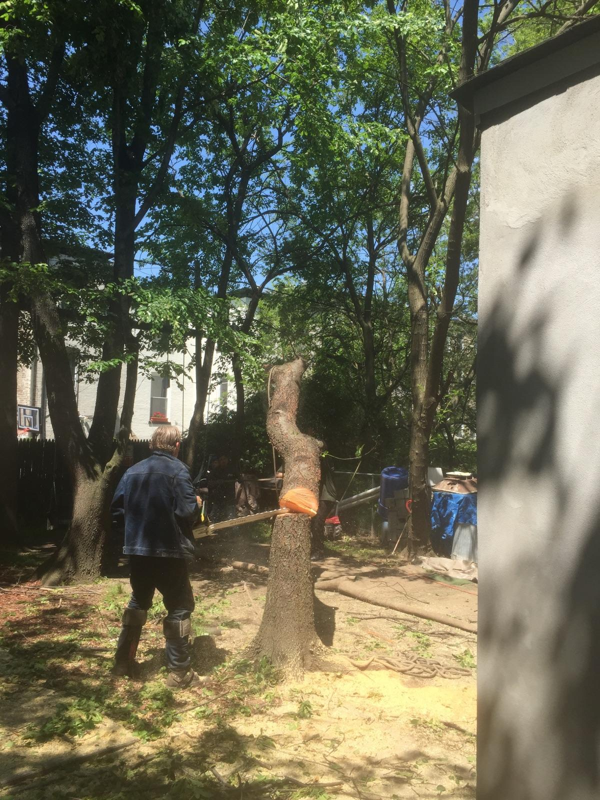 Tree Cutters Brooklyn NY