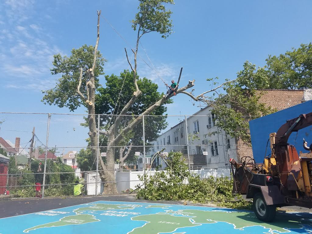 Safe Tree Removal Service Brooklyn
