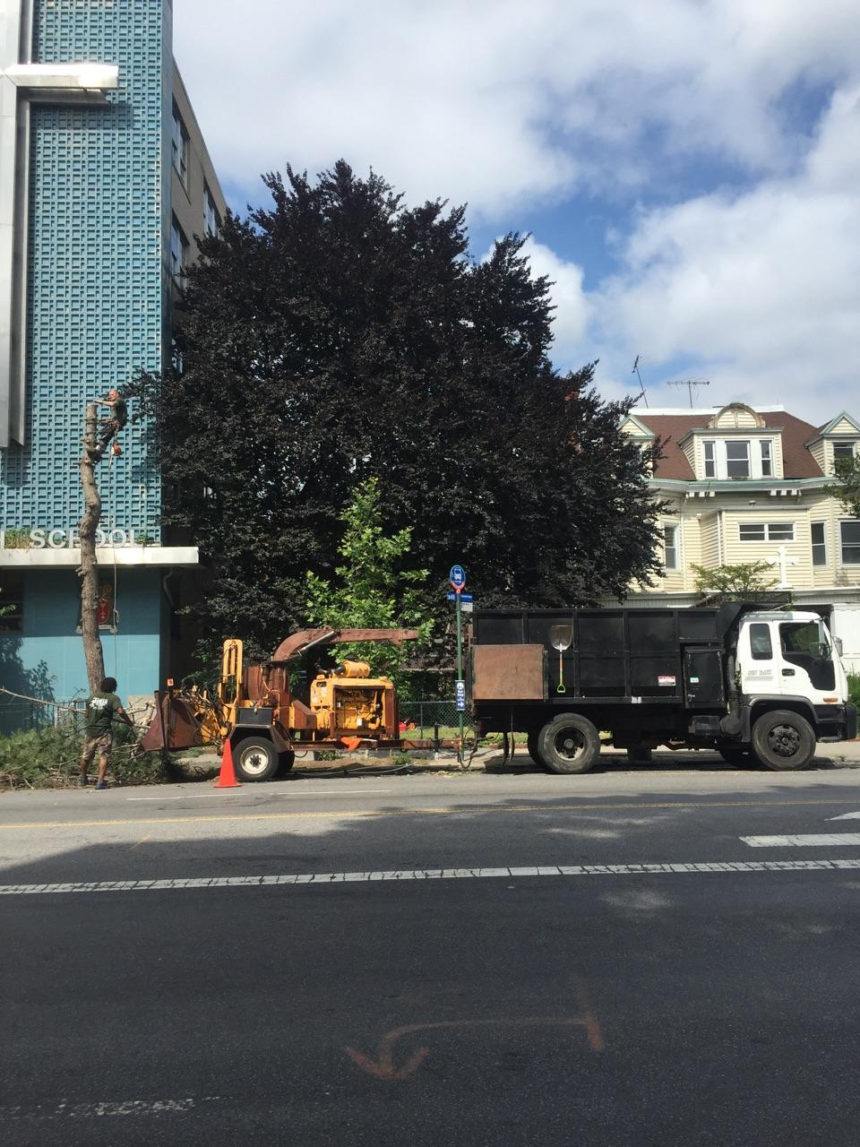 Brooklyn Tree Removal Company