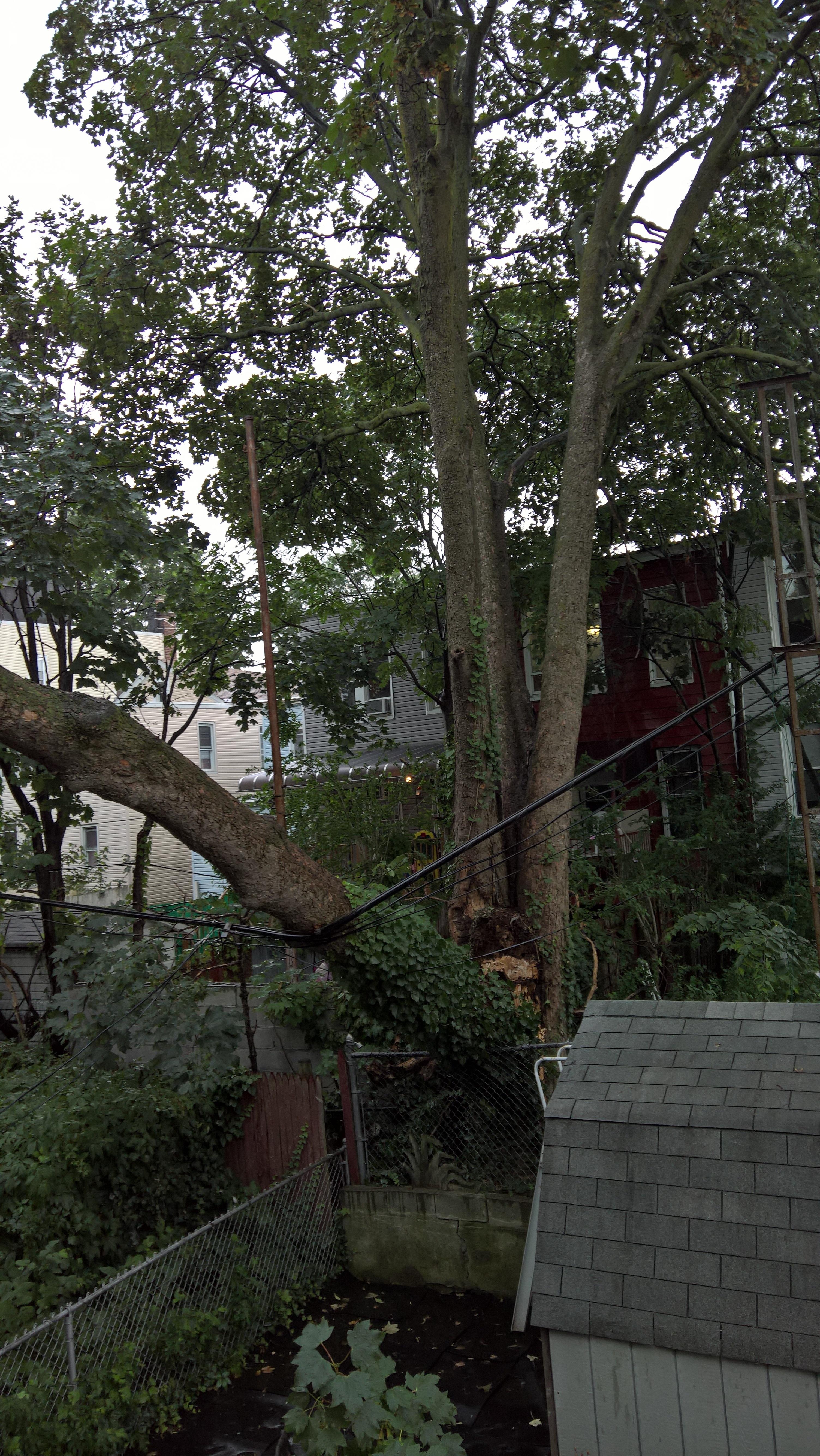 Tree Removal Fallen Tree