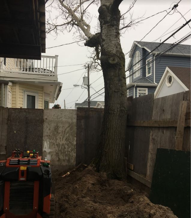 Tree Removal Murry Ave