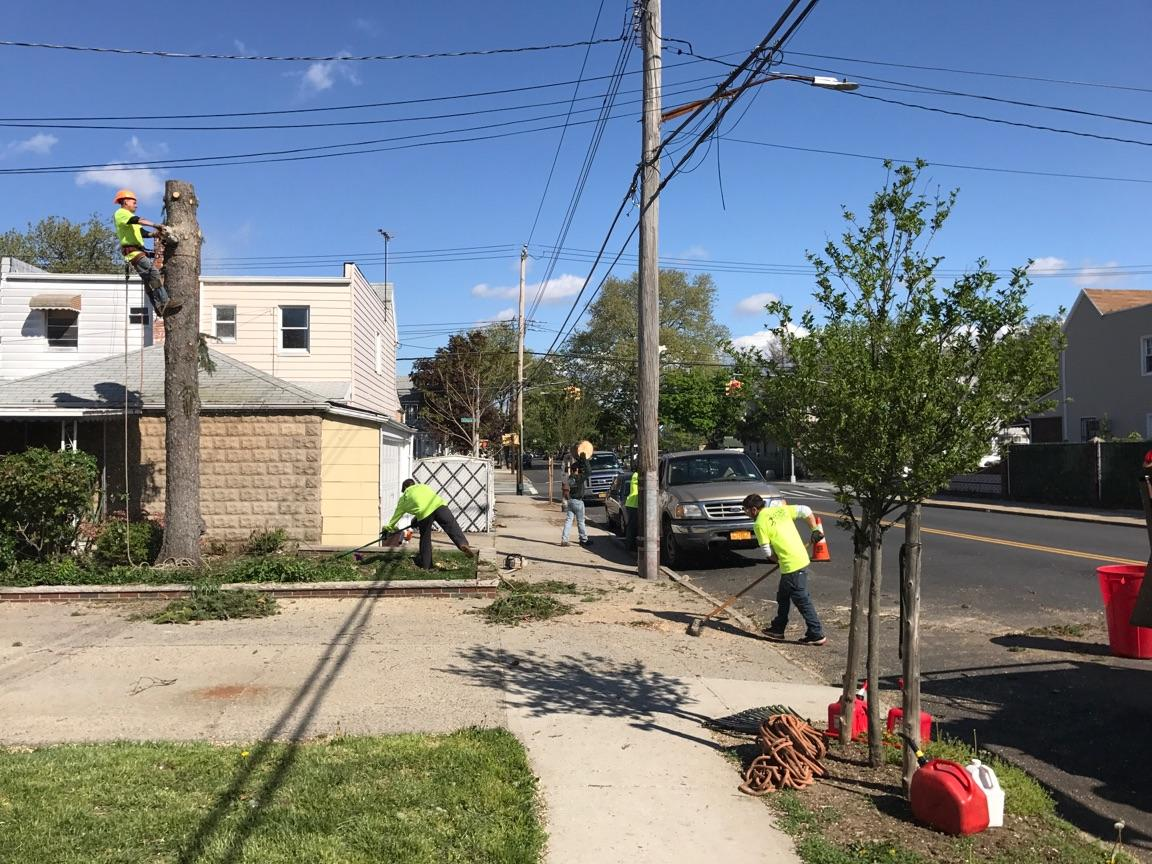 Brooklyn Tree Services in Gravesend