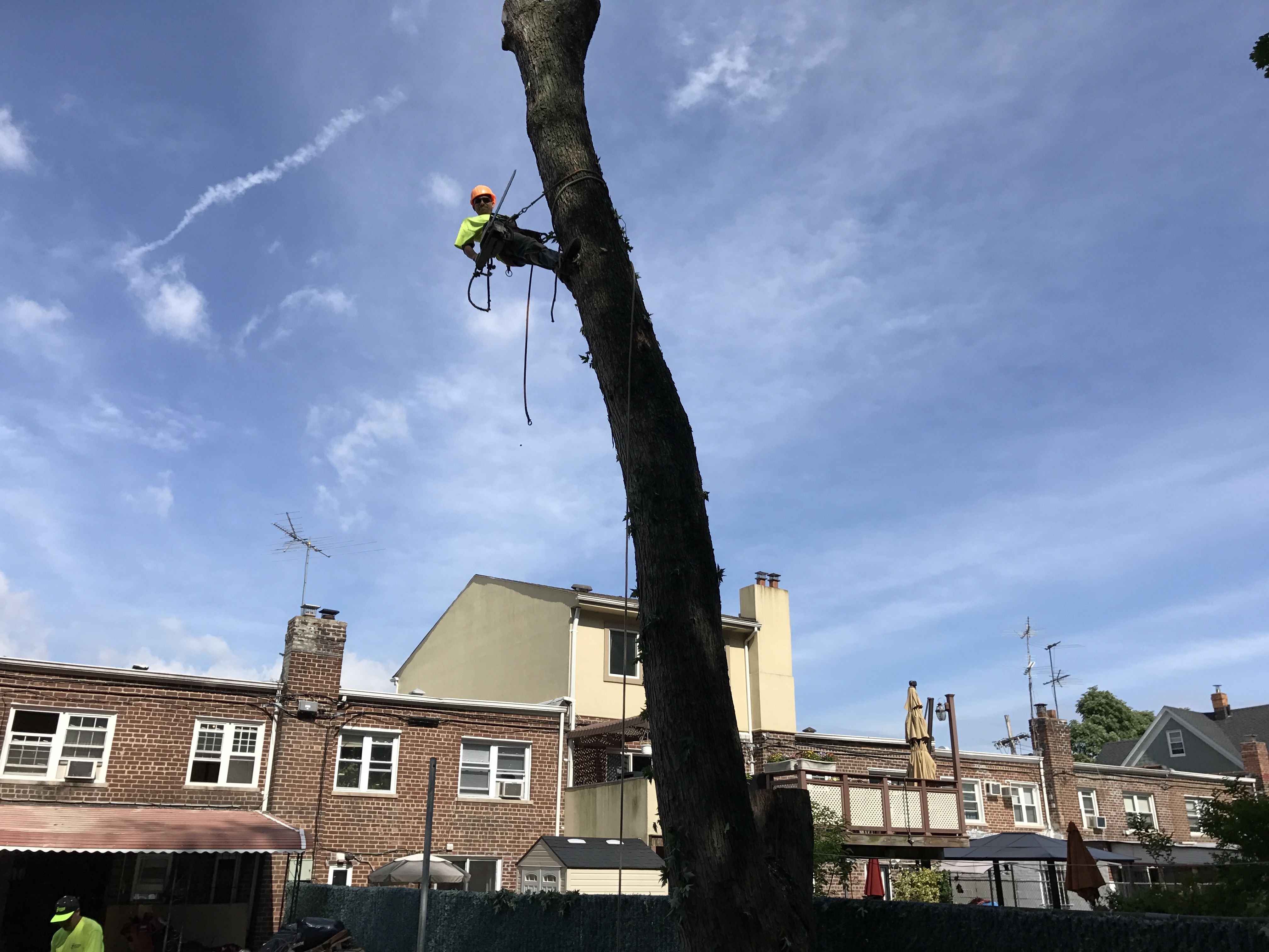 Greenpoint Tree Services