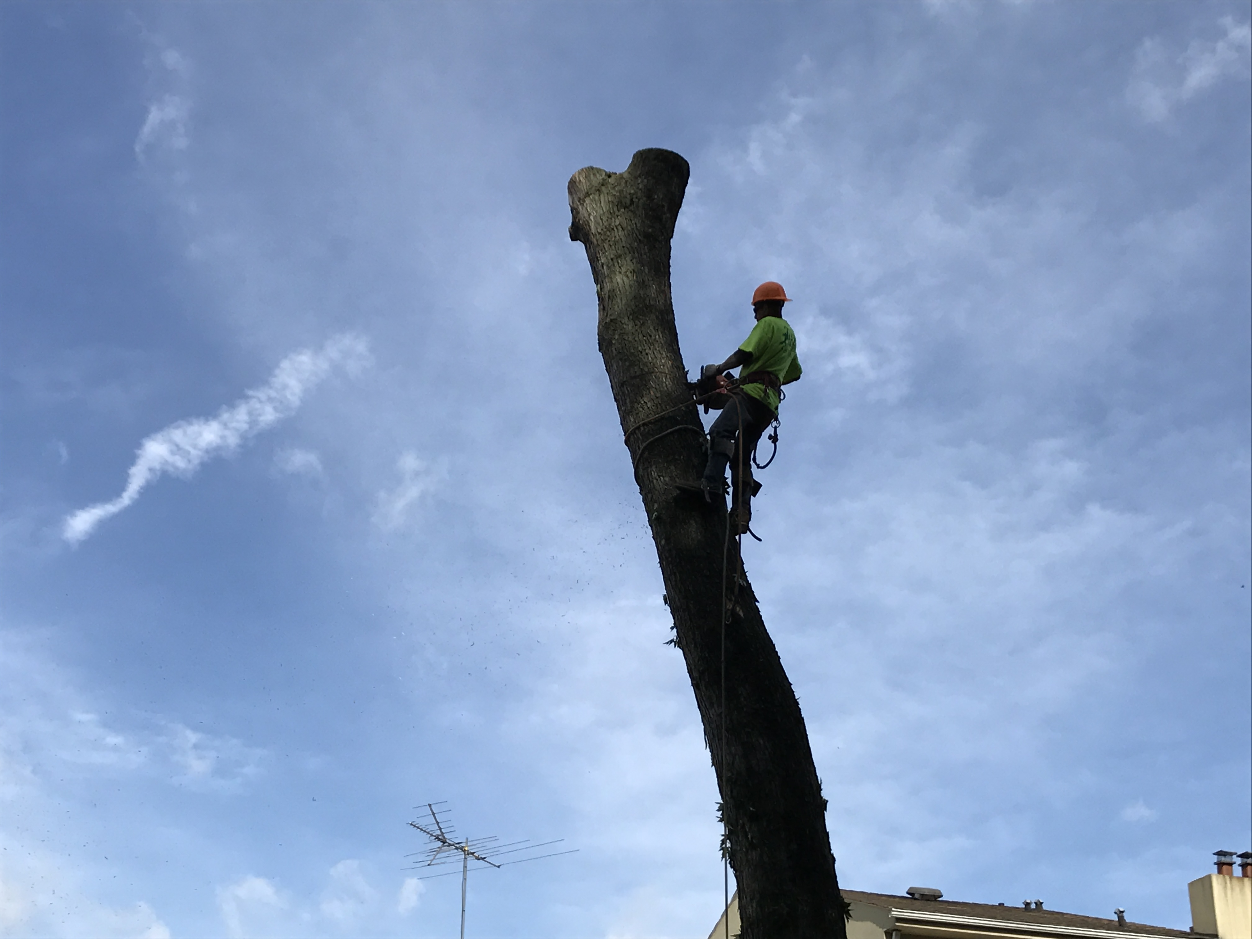 Manhattan Beach Tree Service