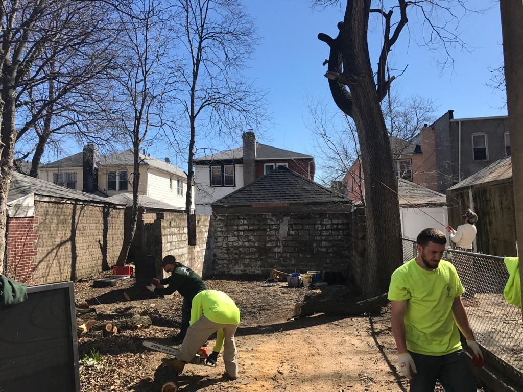 Local Brooklyn Tree Removal