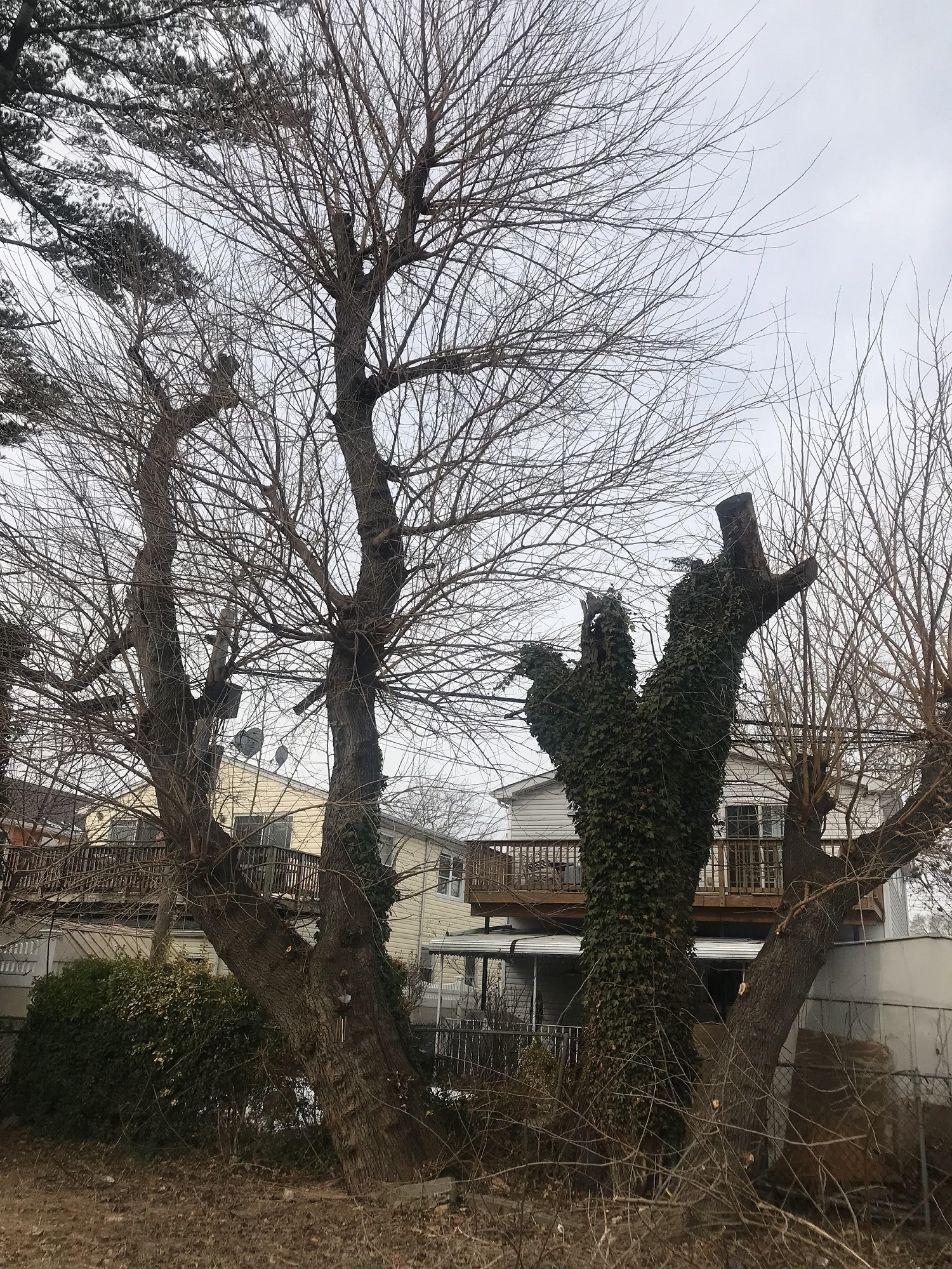 Brooklyn Tree Removal