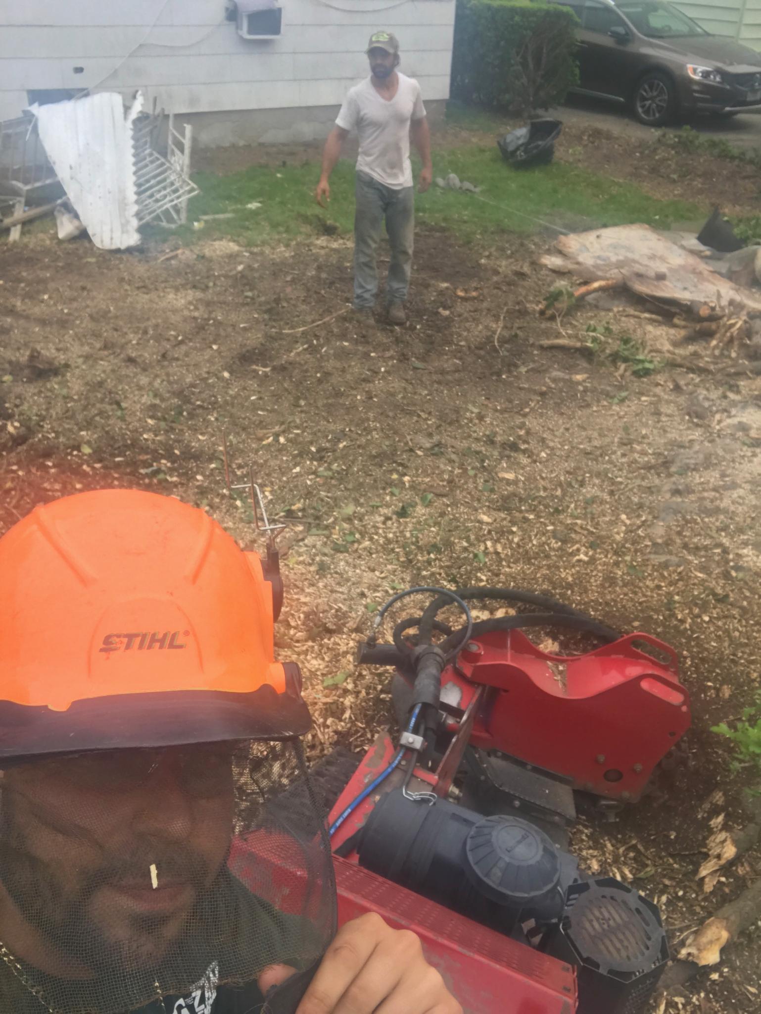 Tree Stump Removal Brooklyn NY