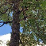 NYC Tree Health