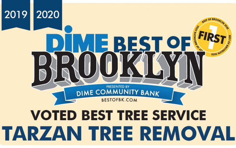 Tarzan Tree Removal Winner Best of Brooklyn 2019 2020